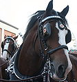 112px-Horses_2