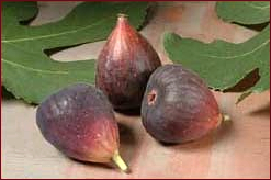 fig_1