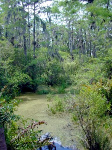 Florida_freshwater_swamp_usgov_image