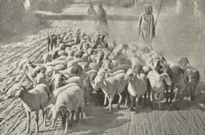 The_Shepherd_and_his_Flock
